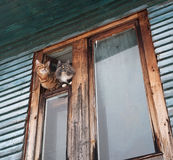 Two cats leaned out of window Royalty Free Stock Photos