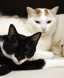 Two cats lie in bed Royalty Free Stock Image