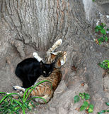 Two cats lie under a tree. International Homeless Animals Day. Two cats lie under a tree. International Homeless Animals Day royalty free stock photos