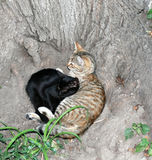 Two cats lie under a tree. International Homeless Animals Day. Two cats lie under a tree. International Homeless Animals Day stock images