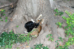 Two cats lie under a tree. International Homeless Animals Day. Two cats lie under a tree. International Homeless Animals Day royalty free stock photography
