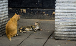 Two cats looking at each other on a corner photo taken in Jakarta Indonesa Royalty Free Stock Photography