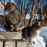 Two cats looking in opposite directions Royalty Free Stock Photography