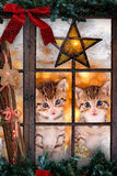 Two cats looking out a window with Christmas decorations Stock Photo