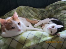 Two cats. Are looking and sweet chilling Stock Photography