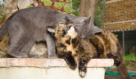 Two cats in love. Portrait of two cats in love in the garden Stock Photography