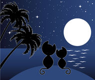 Two cats in love under palms Stock Photos