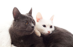Two cats. Lying on white cover Royalty Free Stock Image
