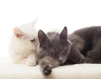 Two cats lying Stock Photo