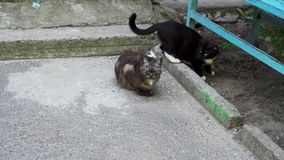 Two cats near the entrance of a house.  stock video