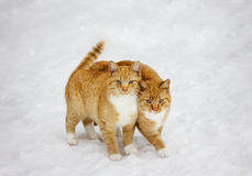 Two cats nestled to each other outdoor in snowy background. Best friends forever stock images