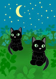 Two Cats at Night. Two black cats sitting together under a starry sky Royalty Free Stock Images