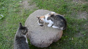 Two cats and old millstone in garden. Two cats and old millstone in farm garden stock footage