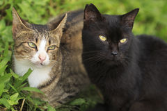 Two cats. (one is black, one is ginger) are sitting together Stock Images