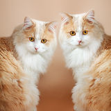 Two  cats on orange background Royalty Free Stock Photo