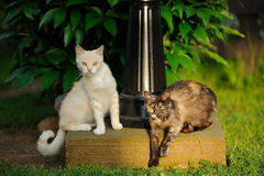 Two Cats Outdoors Royalty Free Stock Photos