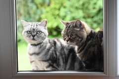 Two cats outside the window Stock Images