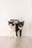 Two cats passing through the cat door Royalty Free Stock Photography