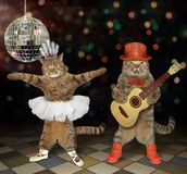 Cats perform in a nightclub 3. The two cats perform in a night club. One plays the acoustic guitar and the second dances royalty free stock photo