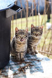 Two cats. Photographed on the table next to plastic buckets Stock Photo
