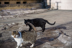 Two cats play outdoors. Royalty Free Stock Photography