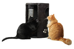 Two cats playing with cat scratcher Royalty Free Stock Image