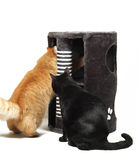Two cats playing with cat scratcher Stock Image