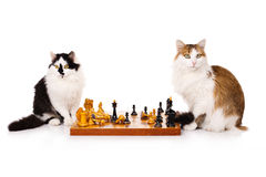 Two cats playing chess Royalty Free Stock Images