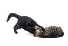 Two cats playing and fighting Stock Photos
