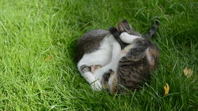 Two cats playing on garden grass stock video footage