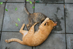 Two cats playing Stock Photos