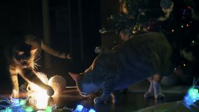 Two cats playing near Christmas tree stock video footage