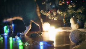 Two cats playing near Christmas tree. Two cats cat playing with toys near Christmas tree stock video footage