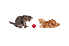 Two Cats Playing Royalty Free Stock Images