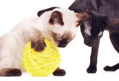 Two Cats Playing With Woolen Ball Stock Images