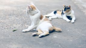 Two cats pretending to be small insects on the cement floor. Two cats playing fun on the cement floor stock footage