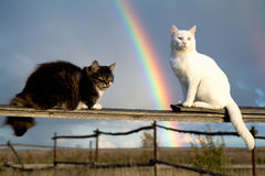 Two cats and rainbow Royalty Free Stock Photos