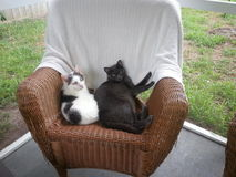 Two Cats on Rattan Chair on Porch. Baxter and Ollie hanging out together on the Stock Photography