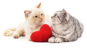 Two cats and red heart. Stock Image