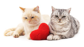 Two cats and red heart. Royalty Free Stock Photography