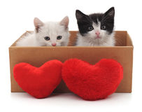 Two cats and red hearts. Royalty Free Stock Photography