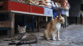 Two cats relax near shop in Asia. Two cats relax near shop Royalty Free Stock Photography