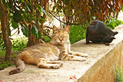 Two cats relaxing in the Andalusian Gardens at the edge of the a Royalty Free Stock Photo
