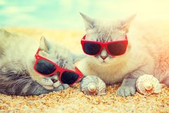 Two cats relaxing on the beach. Two cats wearing sunglasses relaxing on the beach Royalty Free Stock Photos