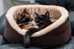 Cat bed with sleeping cats close-up royalty free stock photo