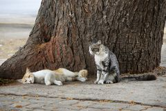 Two cats resting on tree trunk, Pune, Maharashtra, India.  royalty free stock images