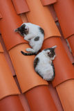 Two cats on the roof Stock Photos