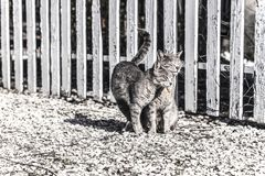 Two cats rubbing their cheeks each other on a farm in a sunny day, isolated. Faded coloured photography, animal photography. Two cats rubbing their cheeks each royalty free stock image