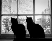 Two Cats in Silhouette at a Window stock photo