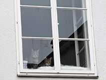 Two cats sit on a window. Two cats sit at the closed window and look down Royalty Free Stock Photography